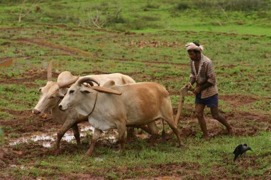 Panjabrao Deshmukh Scheme Interest Subsidy in Maharashtra