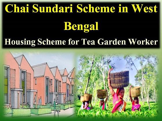 Chai Sundari Scheme in West Bengal